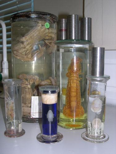 Specimens preserved in jars
