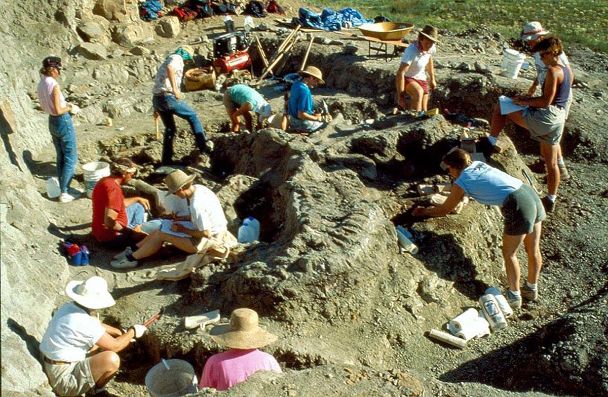 "Excavation of the ""Wankel-T.Rex"" in Eastern Montana, 1990 © Museum of the Rockies"