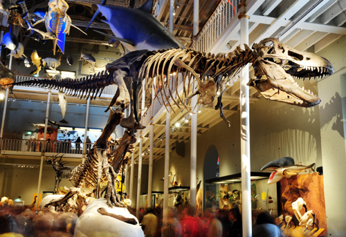 T.rex in Animal World gallery at National Museum of Scotland