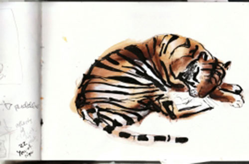 Augustus the tiger having a snooze. Image © Catherine Rayner.