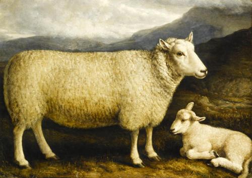 Cheviot Ewe and lamb, 1832-1838, bred by Mr Thomson Attonburn, Roxburghshire