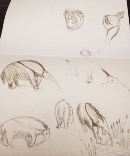 My anteater sketches