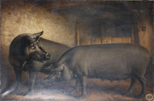 William Shiels, Neaplolitan Boar and Sow, 1833-1838, photographed by FVS Murrell.  Boar, the property of Earl Spencer,  was imported by the Hon. Captain Spencer from Naples; the sow, two years old was bred by the Earl of Leicester from imported stock. The Agricultural museum catalogue label remains affixed to the canvas of this yet to be conserved painting. The breed was first imported by Lord Western (1767-1844) of Rivenhall, Essex; they were remarkable for the flavour of their meat and ability to fatten on the smallest quantity of food.