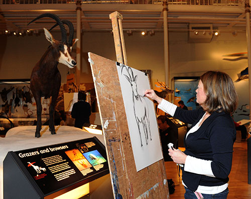 Sketching in the Animal World gallery