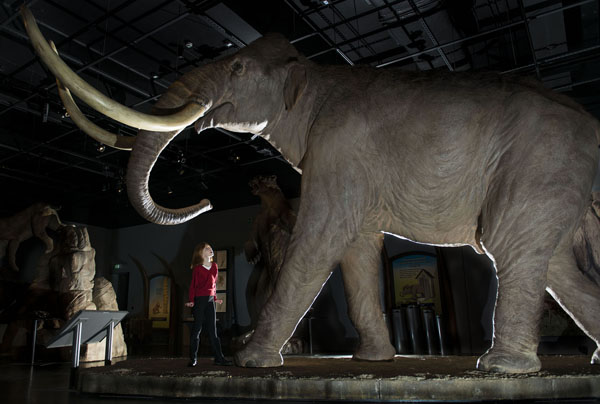 Morag beneath the Colombian Mammoth in the Mammoths of the Ice Age exhibition © Ian Jacobs
