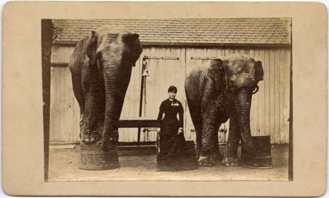 Carte-de-visite depicting Mademoiselle Scherazade, a female elephant trainer, between her two elephants, by F. C. Edmonds. From the Howarth-Loomes collection at National Museums Scotland.
