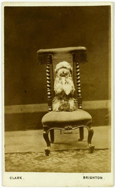 Carte-de-visite of a begging dog. From the Howarth-Loomes collection at National Museums Scotland.