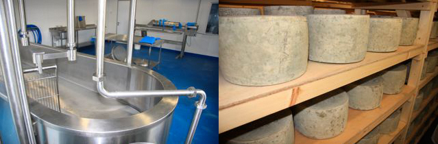 Cheese making at the Barwheys Dairy, Ayrshire, Scotland