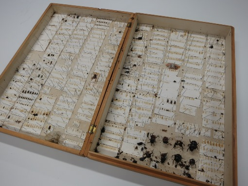 """A collection decimated by pests (aka the """"Box of Doom"""")!"""