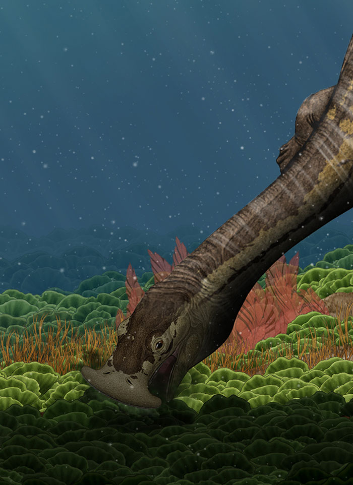 Artist's impression of Atopodentatus Courtesy of Wang Yu, Institute of Vertebrate Palaeontology and Palaeoantropology
