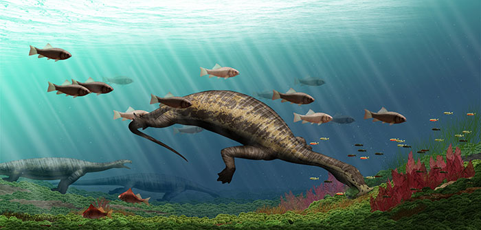 Hammerhead fossil