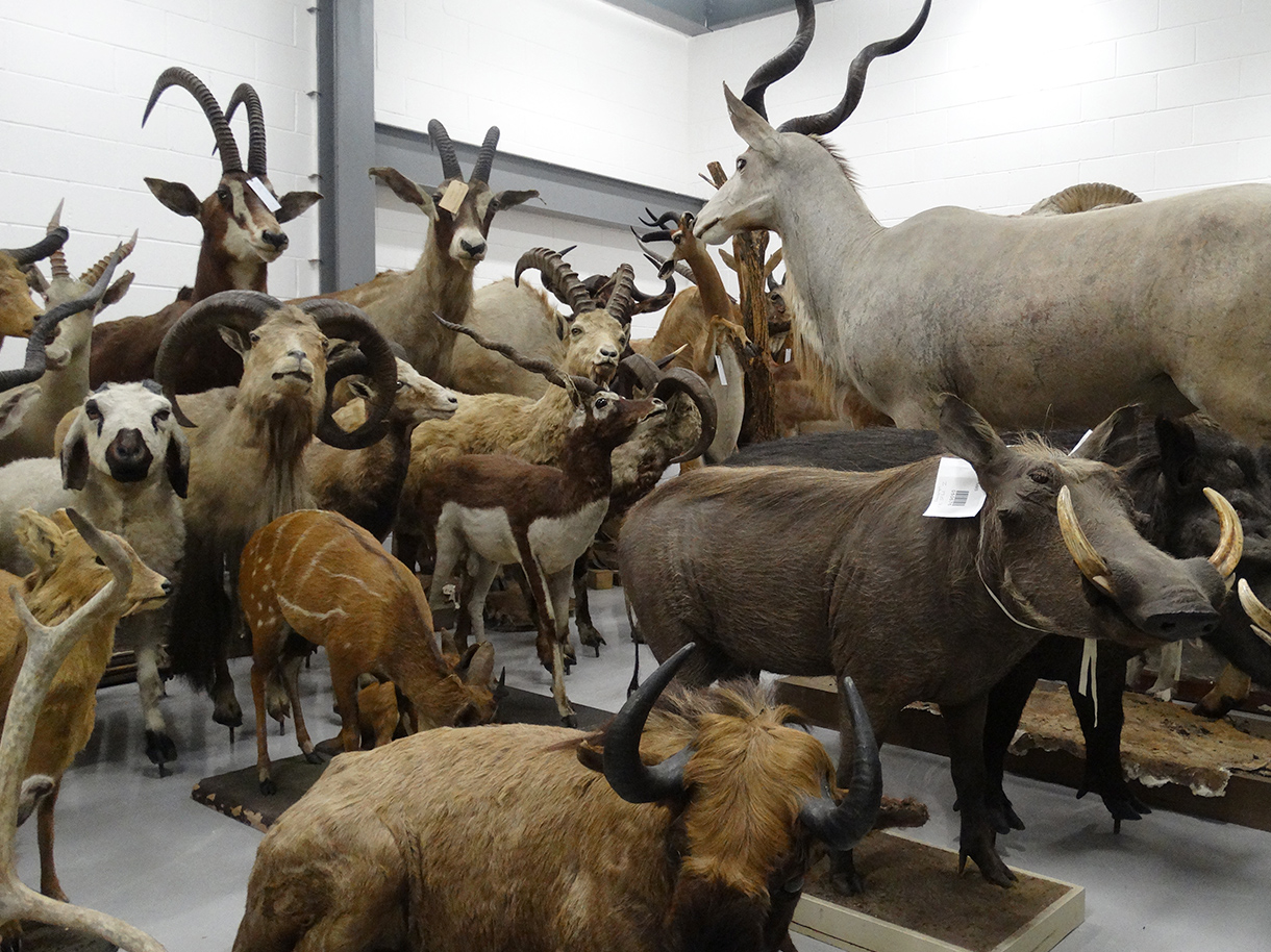 A friendly herd at the Collection Centre.