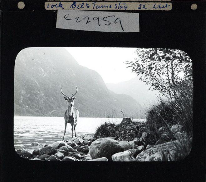 Deer, 1880-1920