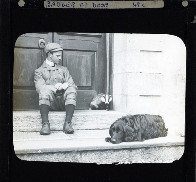 'Badger at door', 1880-1920