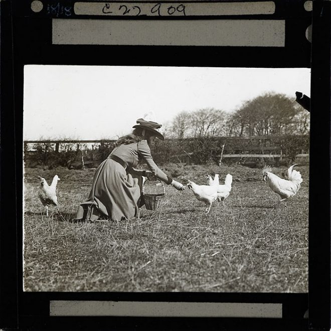 Woman feeding chickens, 1880-1920