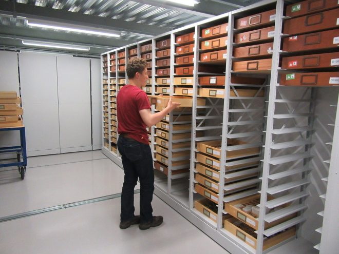 Helping to reorganise part of the invertebrate palaeobiology collection.