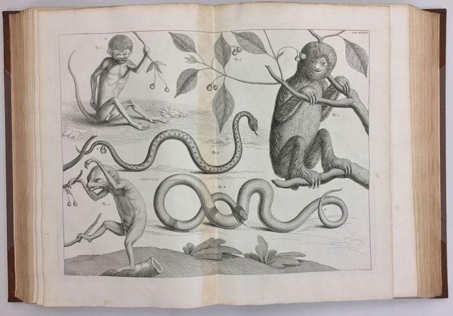 Albertus Seba. Locupletissimi rerum naturalium thesauri accurata descriptio et iconibus artificiosissimus expressio ... / Tomins I [et.] III /, c.1734