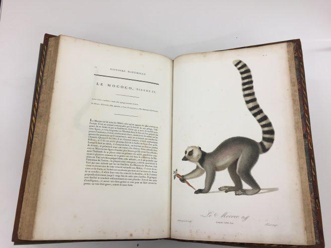 Jean Baptiste Audebert. Histoire naturelle des singes et des makis, c.1799-1800.