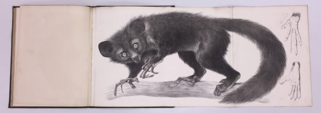 Richard Owen. Monograph on the aye-aye (Chiromys madagascarieusio, Cuvier),1863
