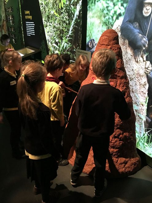 Fishing for termites in the Monkey Business exhibition