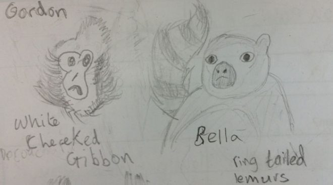 Meet Gordon the white cheeked gibbon and Bella the ring tailed lemur, from P6W Trinity Primary School.
