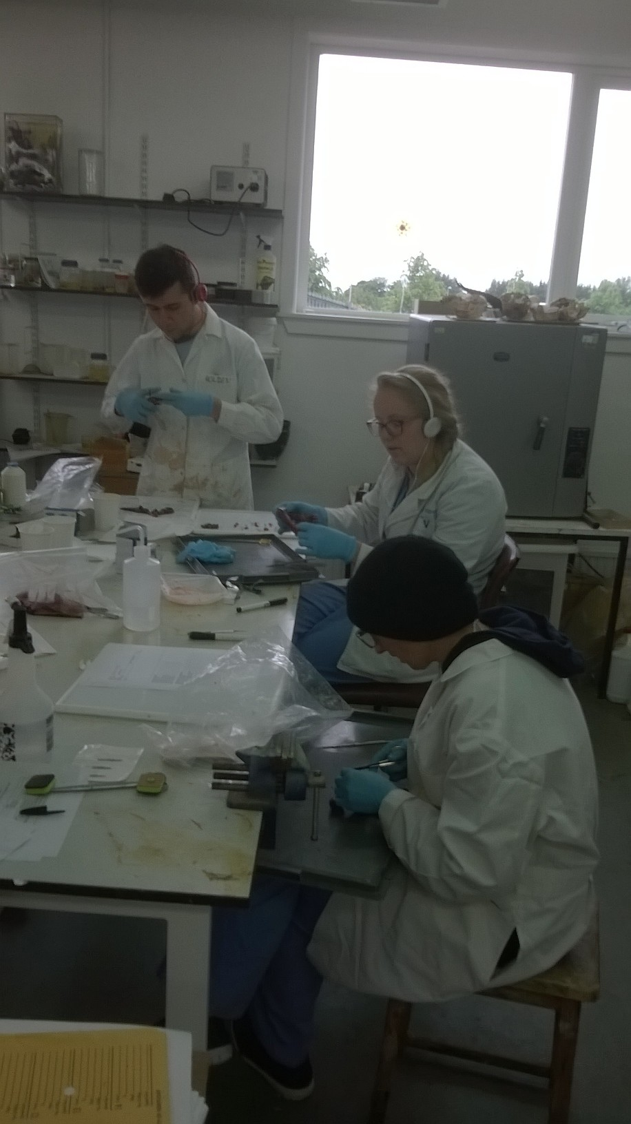 The team working in the lab at the National Museums Collection Centre.