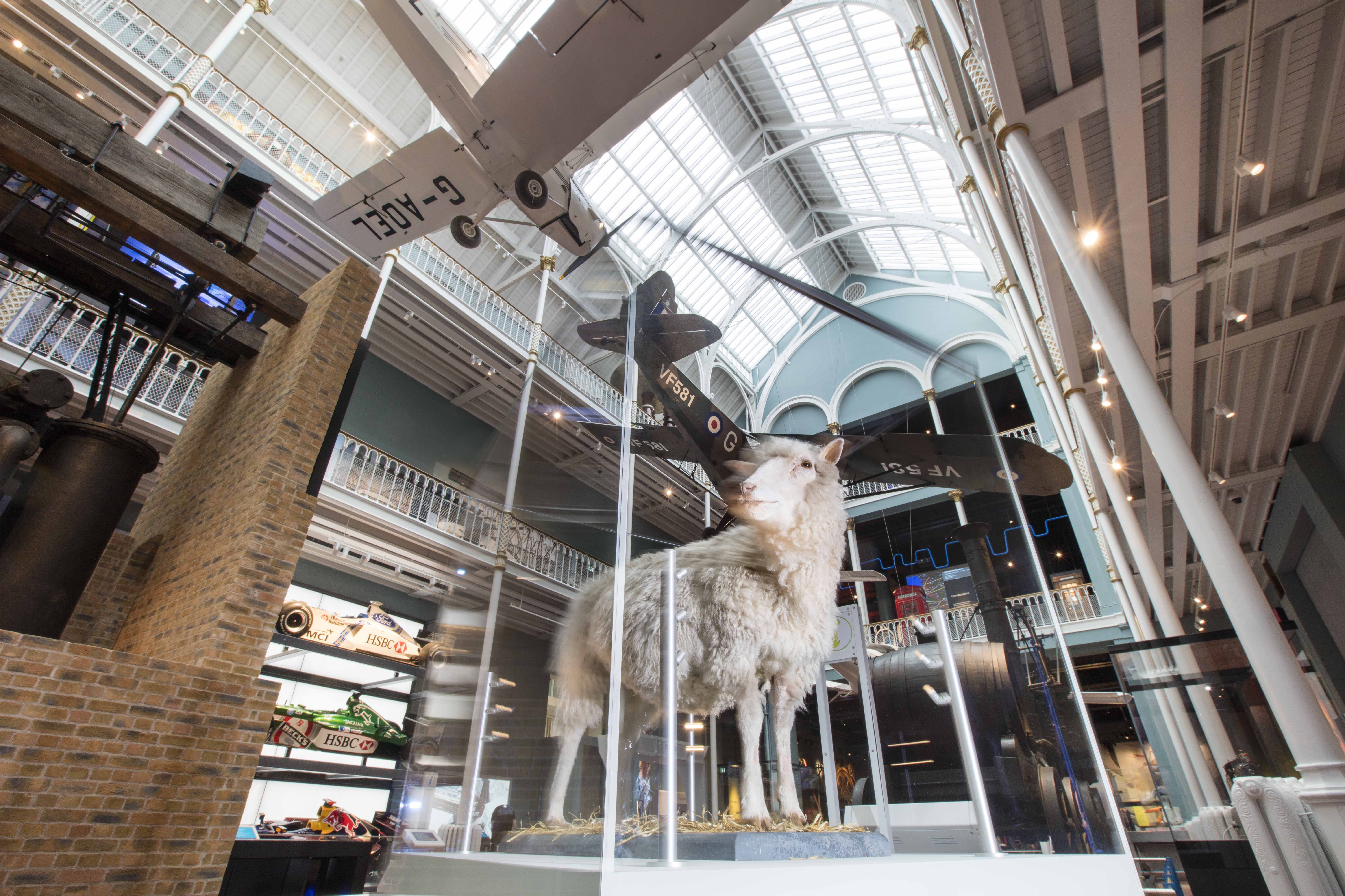 Dolly the sheep on display in the Explore gallery at the National Museum of Scotland