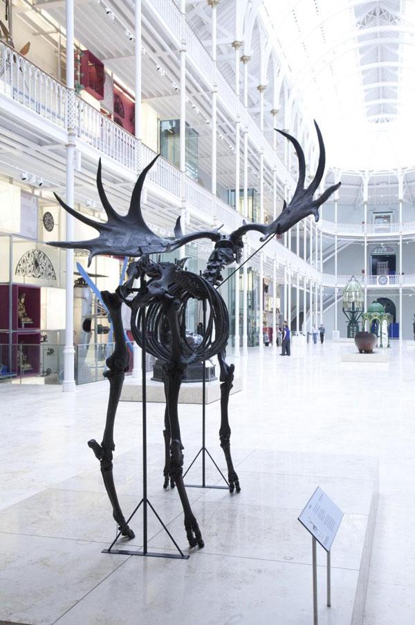 Giant deer skeleton on display in the Grand Gallery.