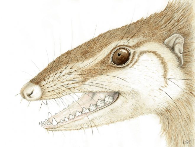 Reconstruction of Wareolestes rex © Elsa Panciroli.