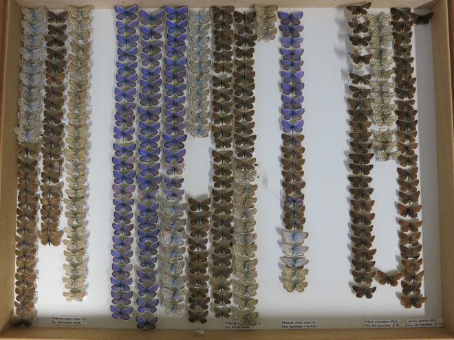 Butterflies in the National Museums collection.