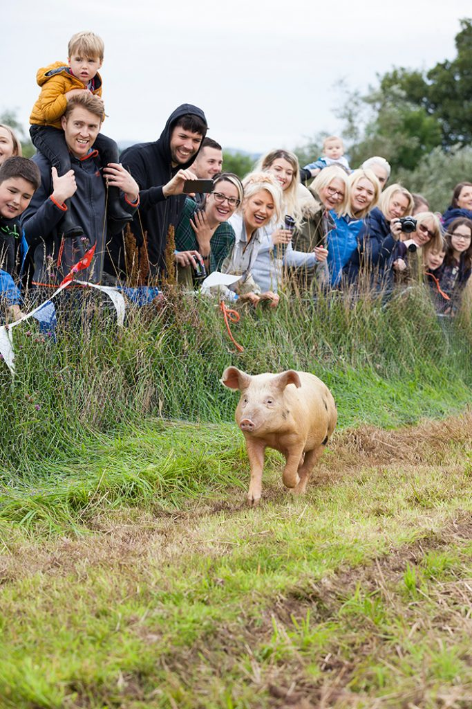 Pig racing. © Ruth Armstrong Photography.