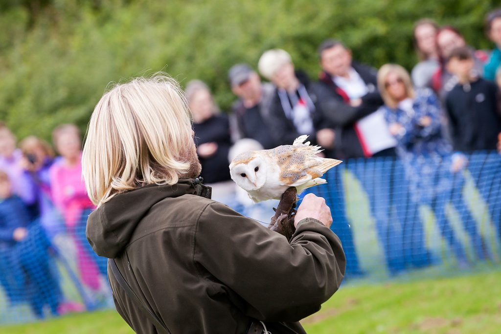 Bird of prey demonstration. © Ruth Armstrong Photography.