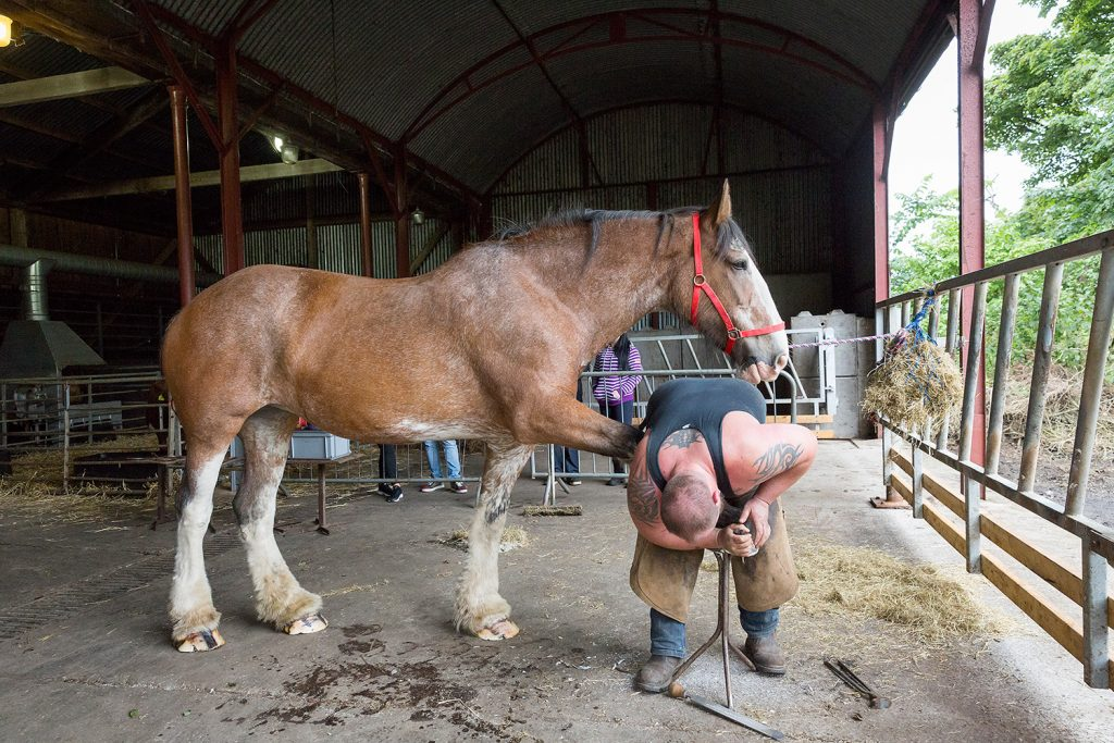 Farrier at work. © Ruth Armstrong Photography.