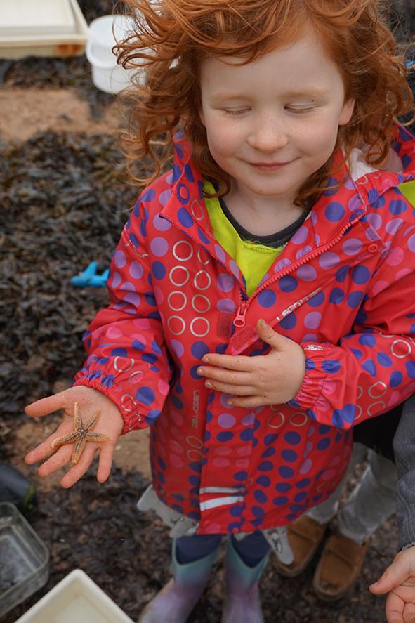 Starfish found on the Seaside Safari