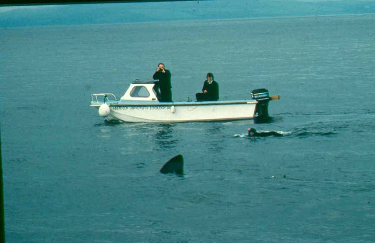 Stalking a large fish from a small boat. The researchers were once tipped out of their dingy by the shark's tail. (Image Monty Priede, University of Aberdeen)