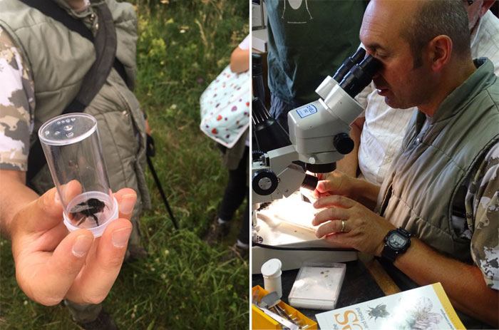 Left: Steven shows us a Queen Red-tailed bumblebee (Bombus lapidarius); Right: Steven demonstrates his dissection technique