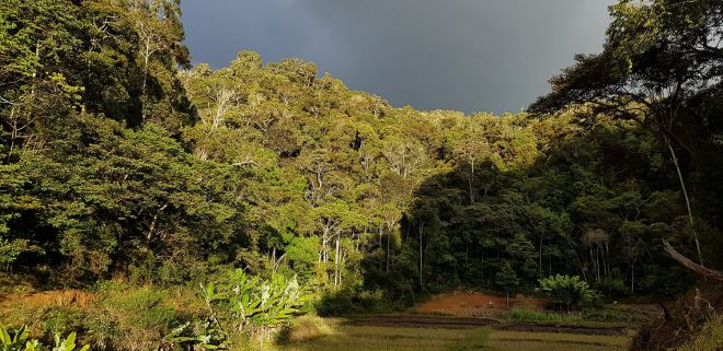 Facing east, showing the edge of the rain forest with tall, indigenous trees.