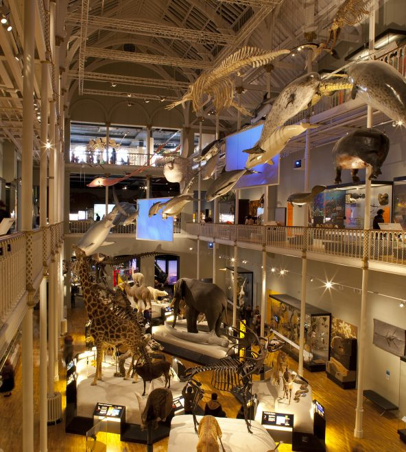 Natural World galleries at the National Museum of Scotland
