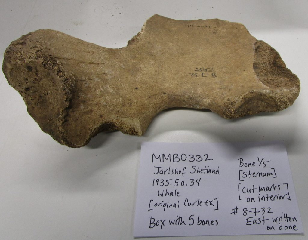 Unidentified whale bones from Jarlshof, Shetland, sampled for ancient DNA and collagen