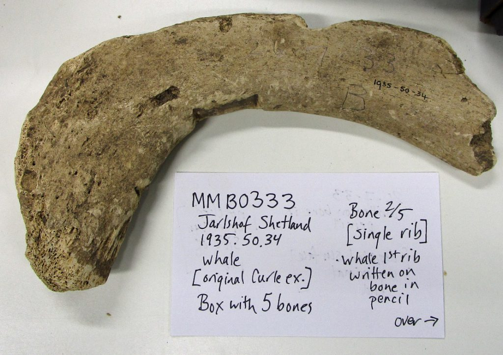 Two unidentified whale bones from Jarlshof, Shetland, sampled for ancient DNA and collagen