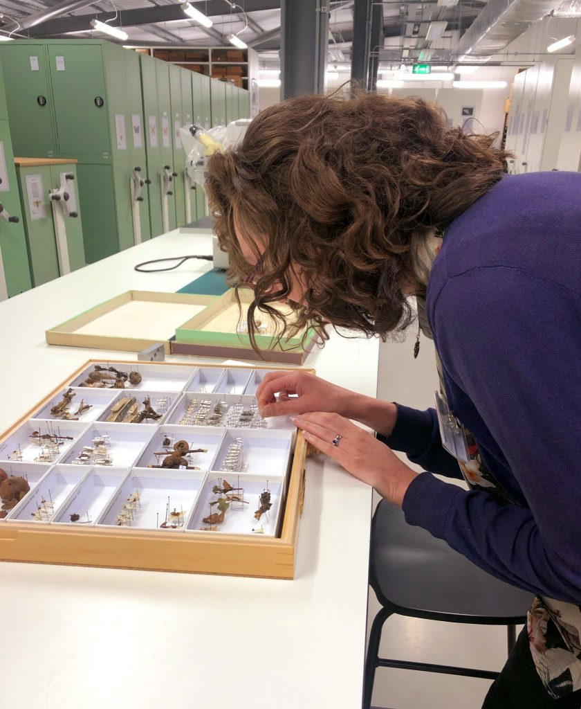 Lucy attaching labels to specimens in a box.