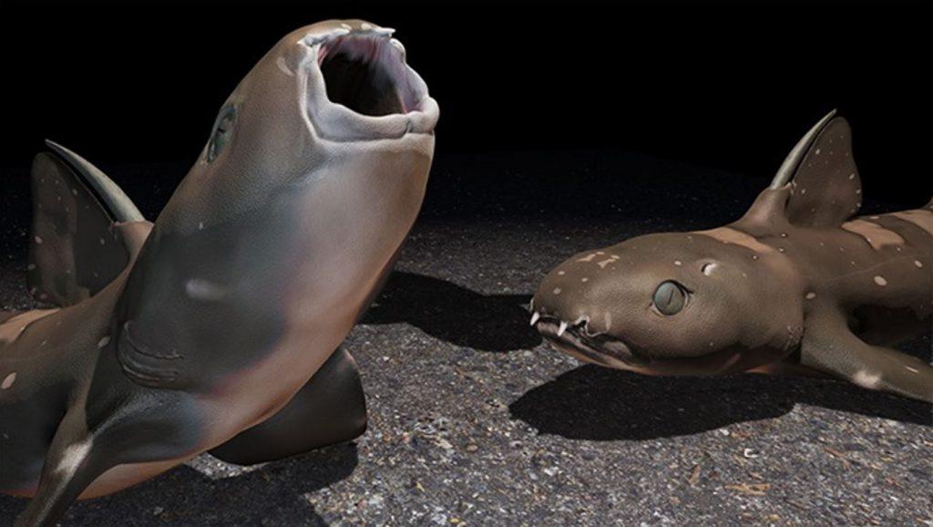 Life reconstruction of the Wardie shark Trystichius arcuatus
