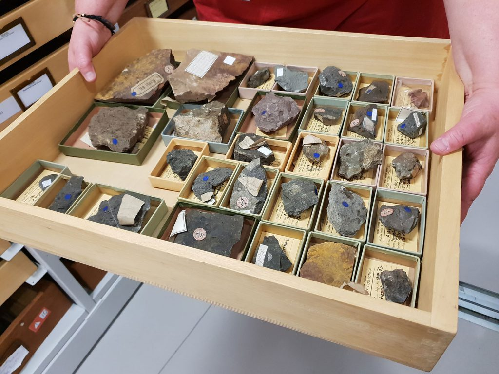A drawer full of brachiopods about to be catalogued and re-boxed