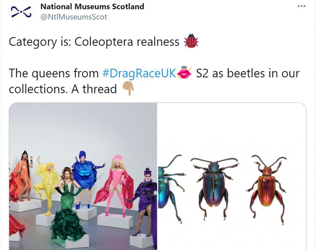 The lead tweet from our UK drag race themed Twitter thread 'Category is: Coleoptera realness The queens from #DragRaceUK S2 as beetles in our collections. A thread'   An image of a group of the Drag Race UK Season 2 queens in rainbow monochrome outfits next to an image of three colourful frog-legged beetles in a row