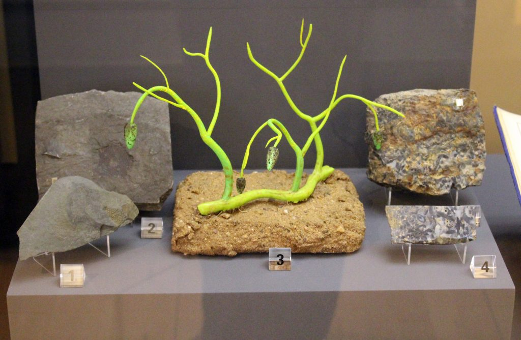 MUseum display with various fossils and a bright green plant model.