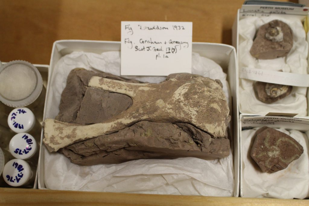 Small boxes containing well packed fossils.