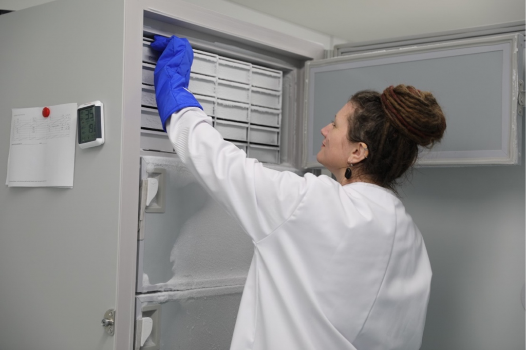 Photo of a woman reaching up and extracting something from a tall industrial freezer.