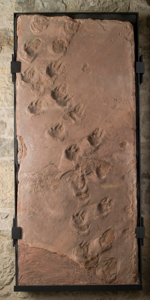 Photo from above of a fossil trackway with small mammalian footprints.