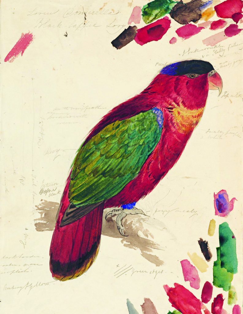 A bright and colourful book page with a painted parrot on it.