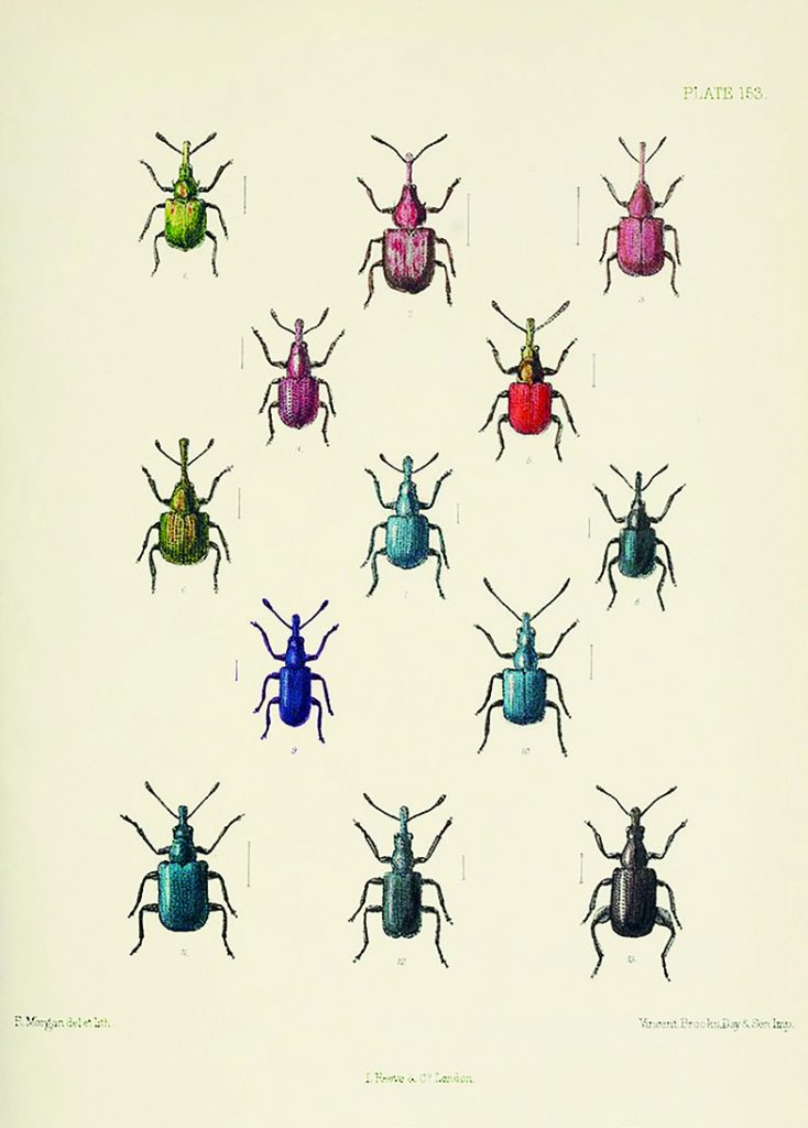 A page from a book depicting colourful beetles.